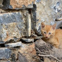 Zwerfkatje op Kreta