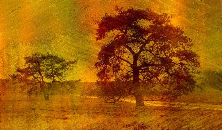 Oude Dennen - De textuur is een foto van een zaagsnede van een boomstronk.