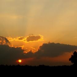 Zonsondergang Biesbosch
