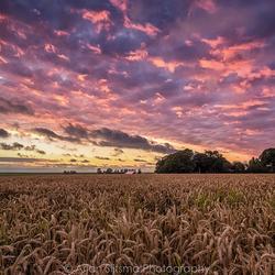 Schitterende luchten boven de graanvelden IV
