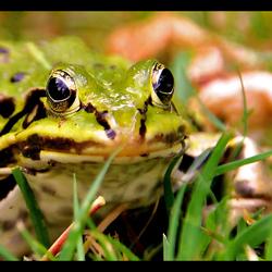 froggie !! ...
