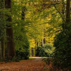 Herfst rondom Twickel.