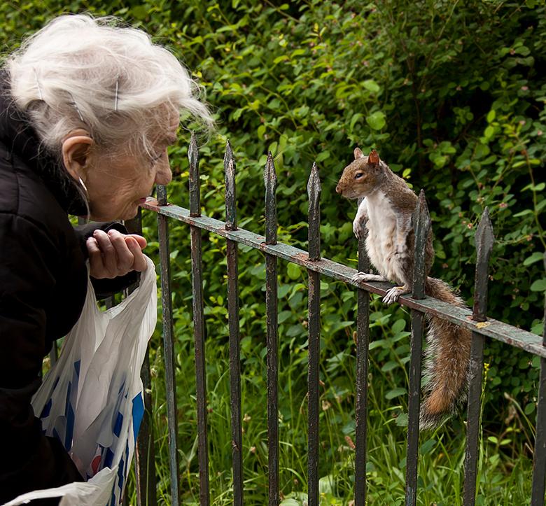 Bad Eyes - Bad eyes heet deze eekhoorn, weet de oude dame me te vertellen terwijl ze de eekhoorn voert in Hyde park London. Zeer leuk gezicht. Deze ee