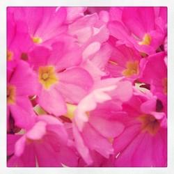 Lovely spring!