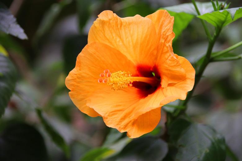 Oranje bloem -