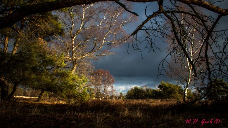 De Borkeld - Lekker wandelen op de Borkeld (omgeving Rijssen)