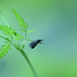 Iets kleins een Sint Jans vlinder of Slijkvlieg ?