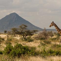 Afrika!!!!