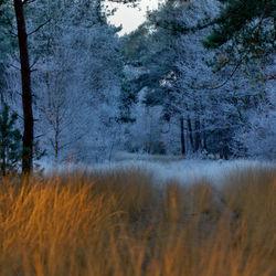 koude ochtend met een warm randje