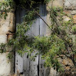 The wooden window