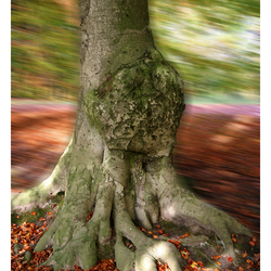 Turning Tree