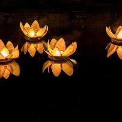 Vlammende lotussen in Leeuwarden