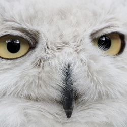 ogen zo mooi