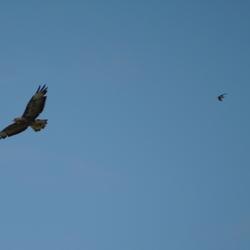 In formatie vliegen