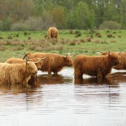 pootje baden in het fochtelooerveen