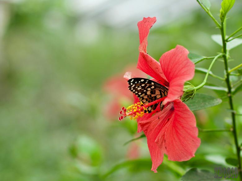 etende vlinder -