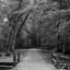 Een bospad met brug