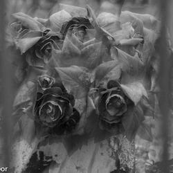 Roses?!