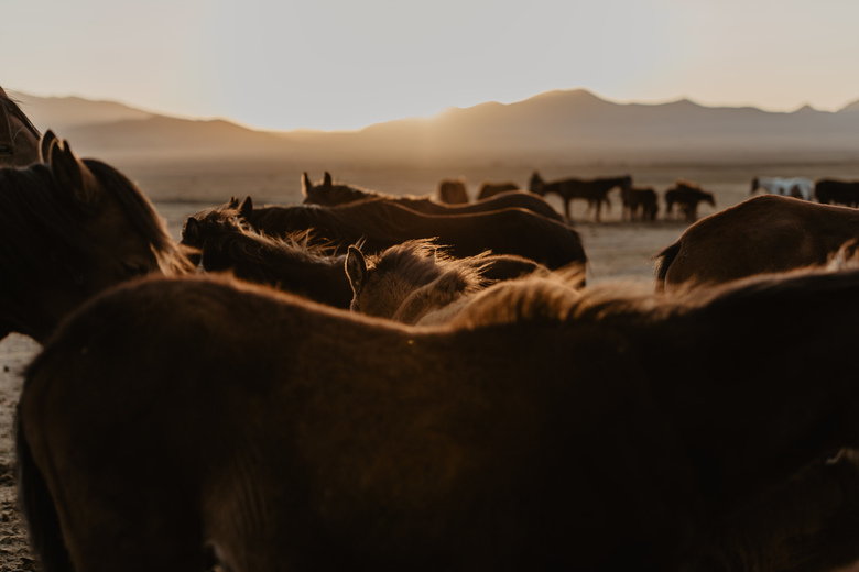 Sunset among horses.