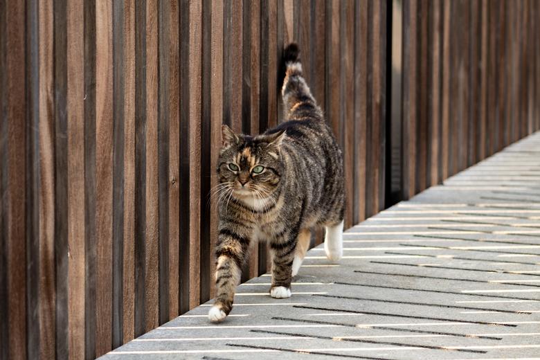 Striped -