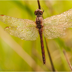 Hanging out to dry - 1.0