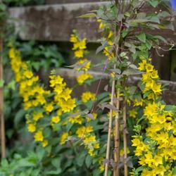 Onkruid in mijn tuin