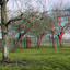 Hoogstam Fruitboomgaard Merwelanden Dordrecht 3D