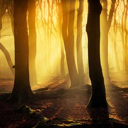 Het speulderbos in Magisch Licht..