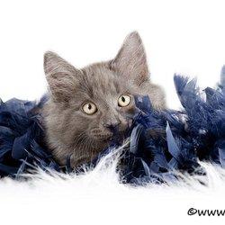 Kitten met Pino