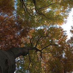Hoge bomen in herfstkleuren.
