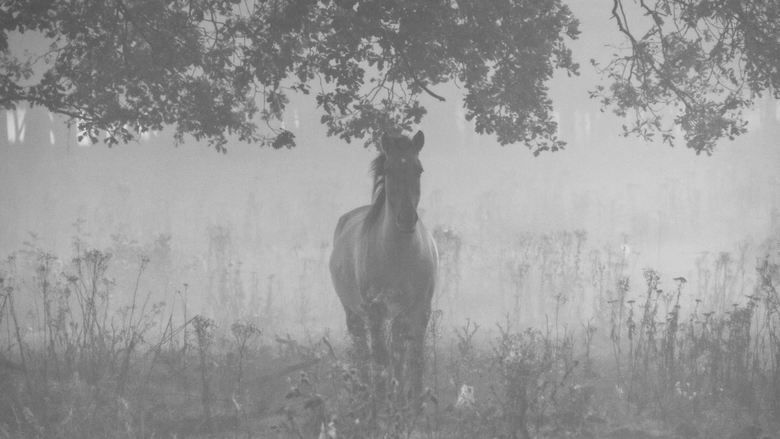 Wild horse in the mist - Mistige ochtend. Opweg om zons opkomst foto's te maken. Sta ik in eens og in oog met een wild paard! Beide nog niet hele