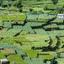 Landschap-Sri Lanka-3