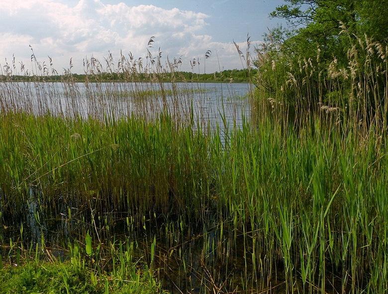Het Naardermeer - is een beschermd natuurgebied aan de noordwestelijke grens van het Gooi, gelegen tussen Muiderberg, Naarden, Hilversumse Meent en We