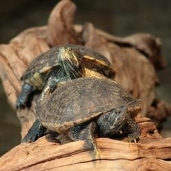 Schilpadden in Artis