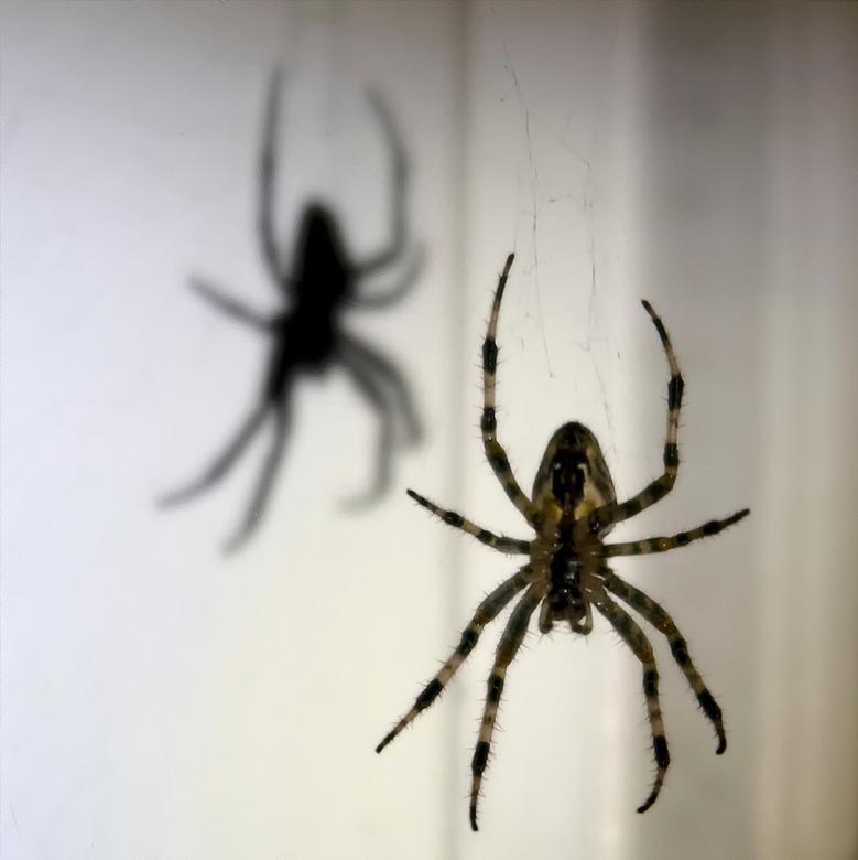 Welkom thuis - Toen ik in het donker thuis kwam was dit wat ik zag in het licht van mijn fietskoplamp. Op een afstandje leek de schaduw van de spin gi