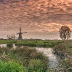 Genieten in de polder