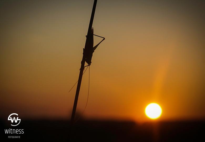 sunset - Silhouet van een sprinkhaan tijdens de zonsondergang gisteravond.