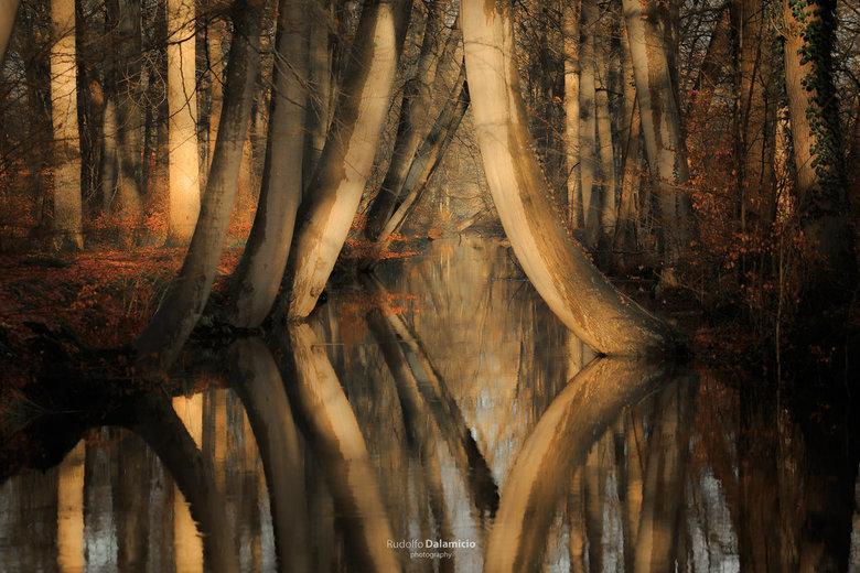Twickelervaart in sunlight - Een prachtige ochtend op landgoed 't Twickel. Heerlijke zonnestralen doen de bomen goed! het orange blad en de schil