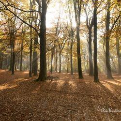 Kaapse-bossen Doorn