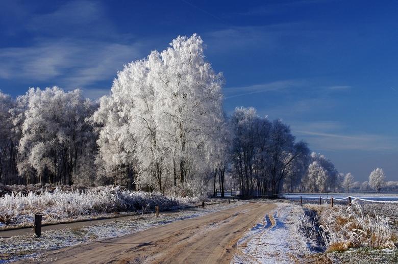 Rijp - Nu de laatste sneeuw hier in het oosten snel verdwijnt nog even een foto van kort geleden toen de wereld prachtig getooid werd met een laag rij