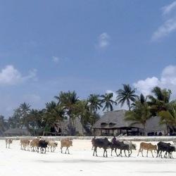 Kiwengwa, Zanzibar