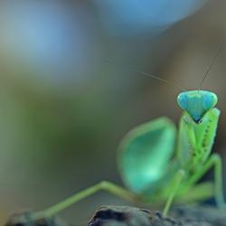 I'm an alien, I'm a legal alien