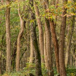 Door de bomen het bos.....