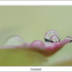 Happy teardrops from heaven