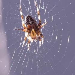 Spin op haar Web