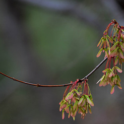 Voorjaar in Virginia USA