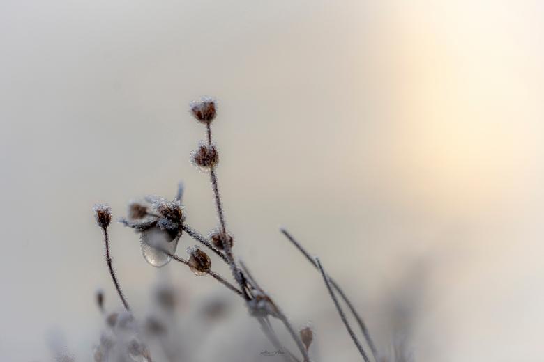 Details ❄️ - Altijd leuk om ook even de details mee te nemen in de winter; de waterdruppels zijn dan mooi bevroren!