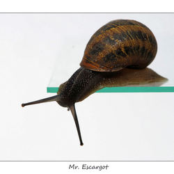 Mr. Escargot