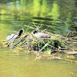 samen nest bouwen