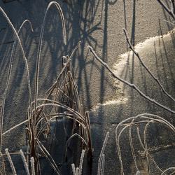 mooi laag winterzonnetje
